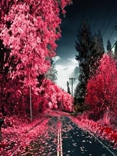 Pink Way Mobile Wallpaper