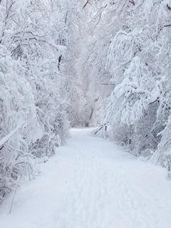 Beautiful Snow Mobile Wallpaper