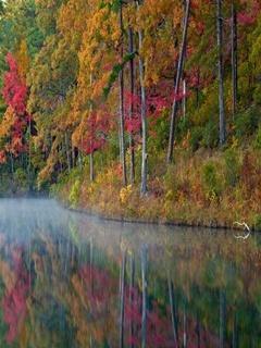 Autumn Reflection Mobile Wallpaper