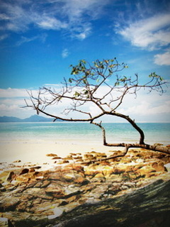 Beach N Tree Mobile Wallpaper