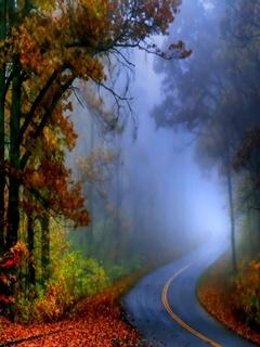 Autumn Mist Mobile Wallpaper
