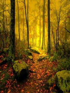 Dawn Trail Mobile Wallpaper