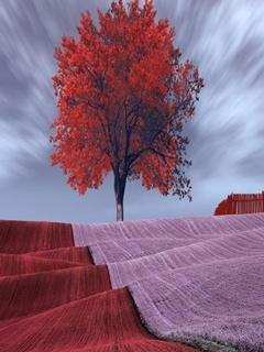 Red Tree Mobile Wallpaper