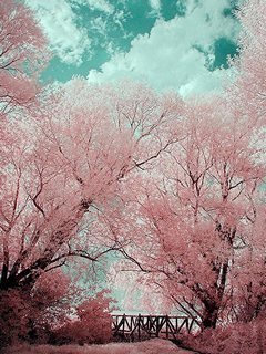 Nice Pink Nature Mobile Wallpaper