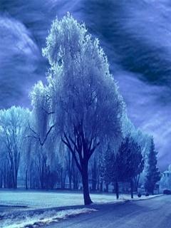 Blue Winter Mobile Wallpaper