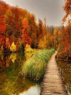 Autumn Bridge Mobile Wallpaper