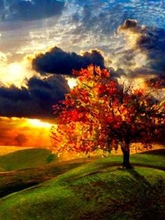 Sunset Nature Mobile Wallpaper