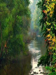 Peaceful River Mobile Wallpaper