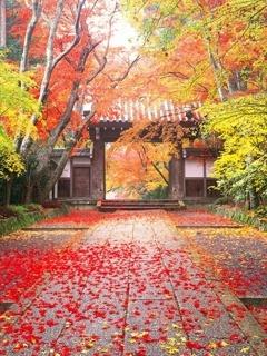Autumn Gate Mobile Wallpaper