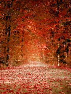 Path Way Mobile Wallpaper