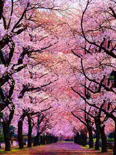 Chary Bloss Mobile Wallpaper