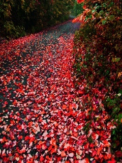 Red Fall Road Mobile Wallpaper