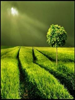 Green Night Mobile Wallpaper