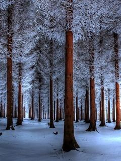 White Trees Mobile Wallpaper