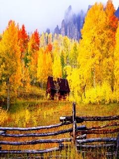 Yellow Autumn Mobile Wallpaper