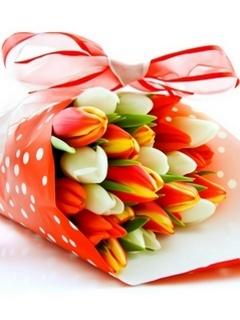 Tulips Mobile Wallpaper