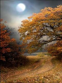 Autumn N Moon Mobile Wallpaper