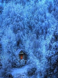 Winter Forest Mobile Wallpaper