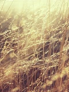 Field Grass Mobile Wallpaper
