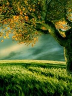 Grass N Lights Mobile Wallpaper