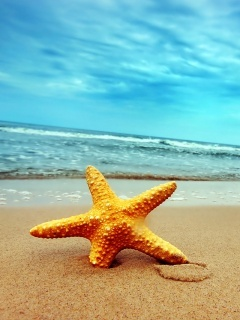 Sea Star Mobile Wallpaper