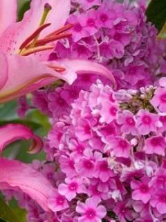 Puprle Flower Mobile Wallpaper