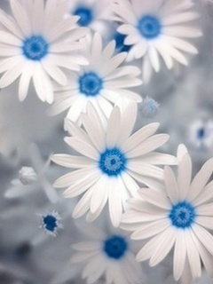 Blue Flower Mobile Wallpaper