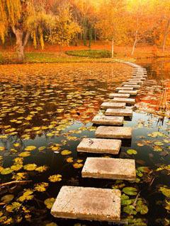 Autumn Way Mobile Wallpaper