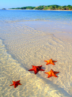 Sea Stars Mobile Wallpaper