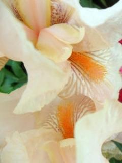 Flowers Mobile Wallpaper