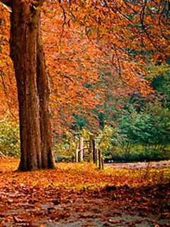 Nice Orange Autumn Mobile Wallpaper