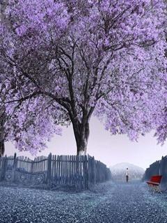 Big Tree Mobile Wallpaper