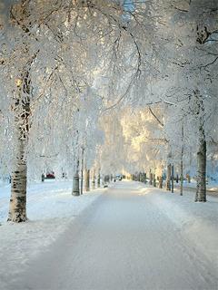 White Winter Mobile Wallpaper