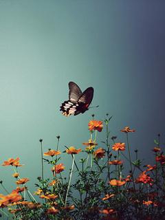Butterfly Over Flower Mobile Wallpaper