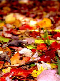 Colors Leafs Mobile Wallpaper