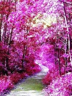 Purple Garden Mobile Wallpaper