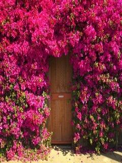 Door With Flowers Mobile Wallpaper