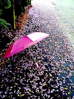 Pink Umbrella Mobile Wallpaper