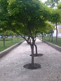 Trees Mobile Wallpaper