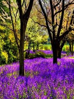 Purple Flowers Mobile Wallpaper
