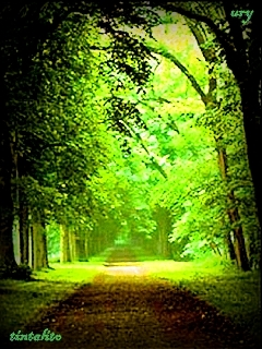 Forest Road Mobile Wallpaper