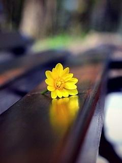 Flower On Bench Mobile Wallpaper