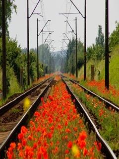 Spring Tracks Mobile Wallpaper