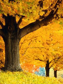 Autumn Yellow Mobile Wallpaper