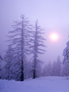 Winter And Sun Mobile Wallpaper