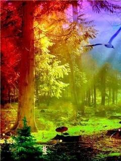 Rainbow View Mobile Wallpaper