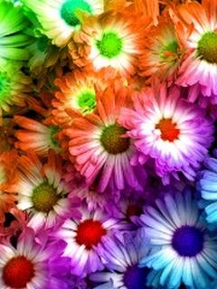 Colorful Flower Mobile Wallpaper