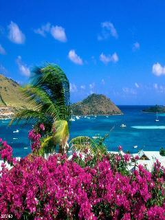Nice View Sea Mobile Wallpaper