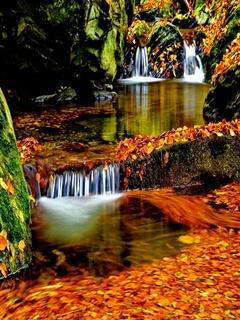Autumns Tree Mobile Wallpaper