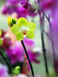 Beautiful Flower Mobile Wallpaper